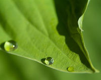 Picture of Rainwater Harvesting and Management - ONLINE