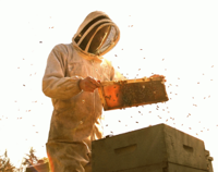 Picture of Bee Keeping: Introductory Course